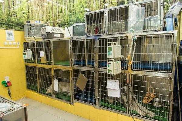 Hospitalizacion veterinaria en Madrid en la clínica veterinaria Velázquez