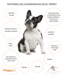 Leishmaniosis-canina