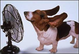 calor