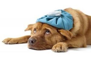 Gripe-canina