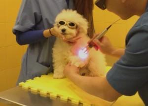 laserterapia-veterinaria-clinica-veterinaria-velazquez